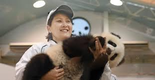 熊川智子(アドベンチャーワールド)パンダの伝説飼育員のプロフ・経歴は?【逆転人生】
